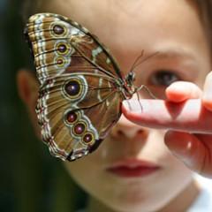 asas-de-borboleta-1-240x240